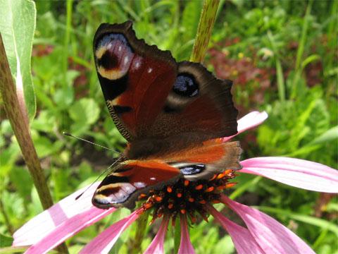 Разнообразие бабочек